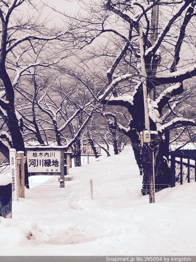 雪,きれい,雪景色,河川敷,秋田,角館