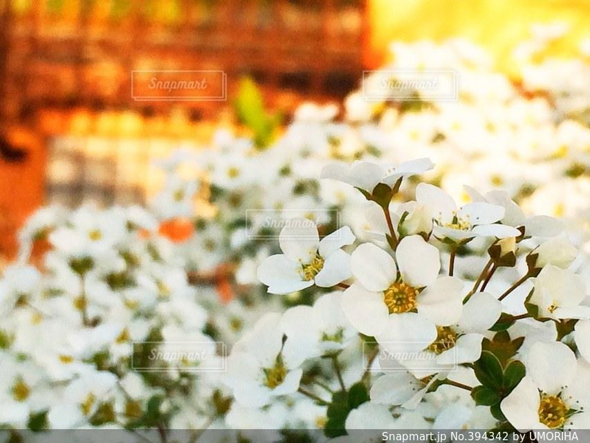 公園,花,春,花畑,夕方