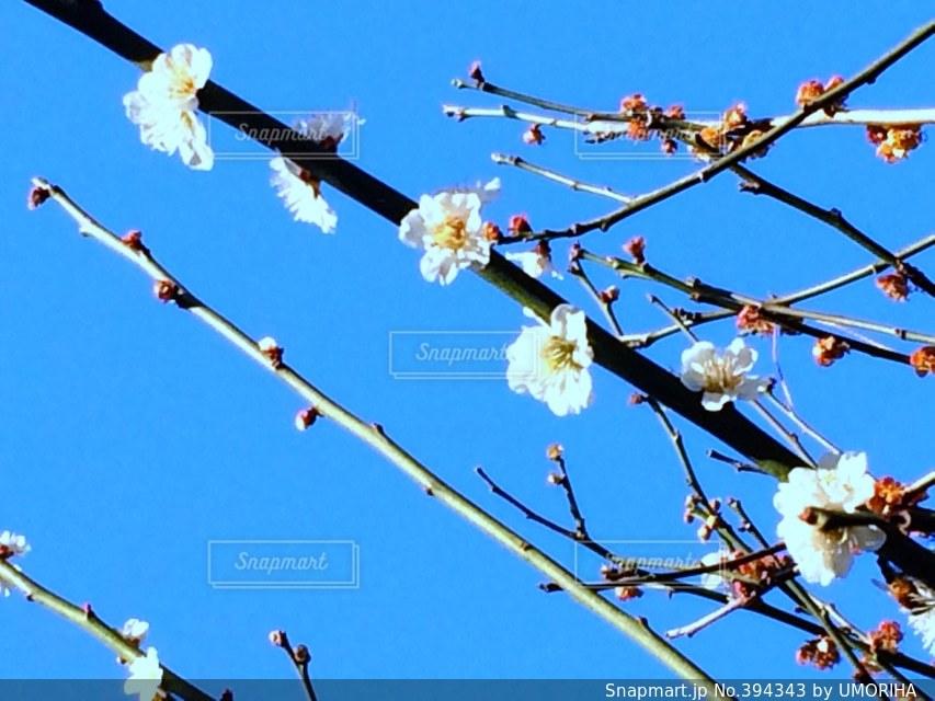 公園,花,春,桜,青空