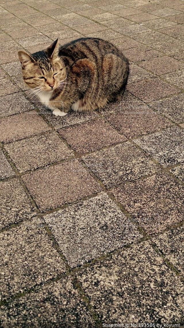猫,茶色,ねこ,座る,ウィンク,街中,一休み,ネコ,冷静
