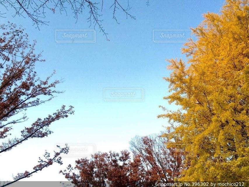 自然,空,秋,冬,紅葉,赤,雲,枝,ウォーキング,散歩,葉,もみじ,夕方,木々,癒し,寂しい,黄,橙,寒空