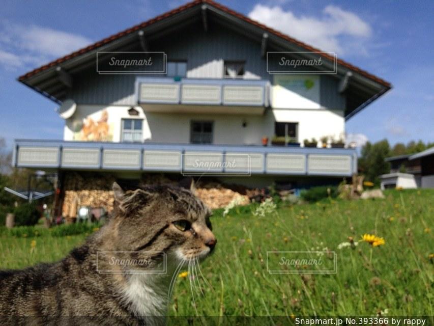 猫,春,ねこ,ドイツ
