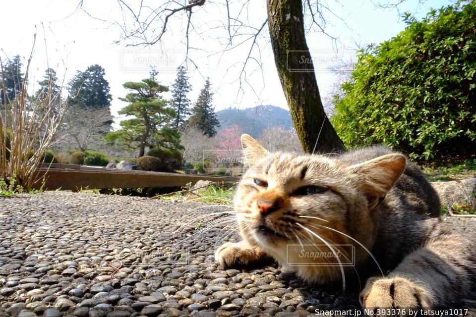 猫,癒し,日向ぼっこ