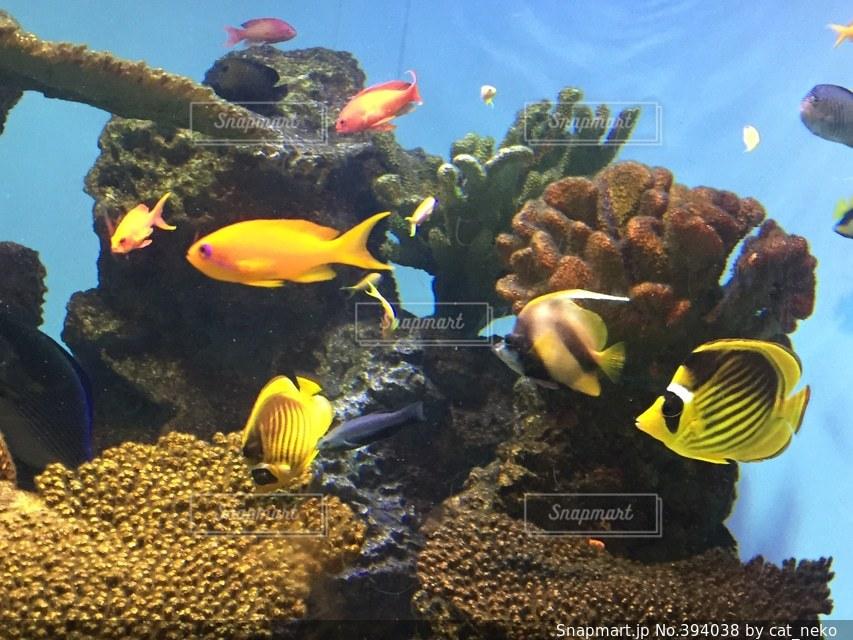 魚,熱帯魚,水族館,泳ぐ,鮮やか