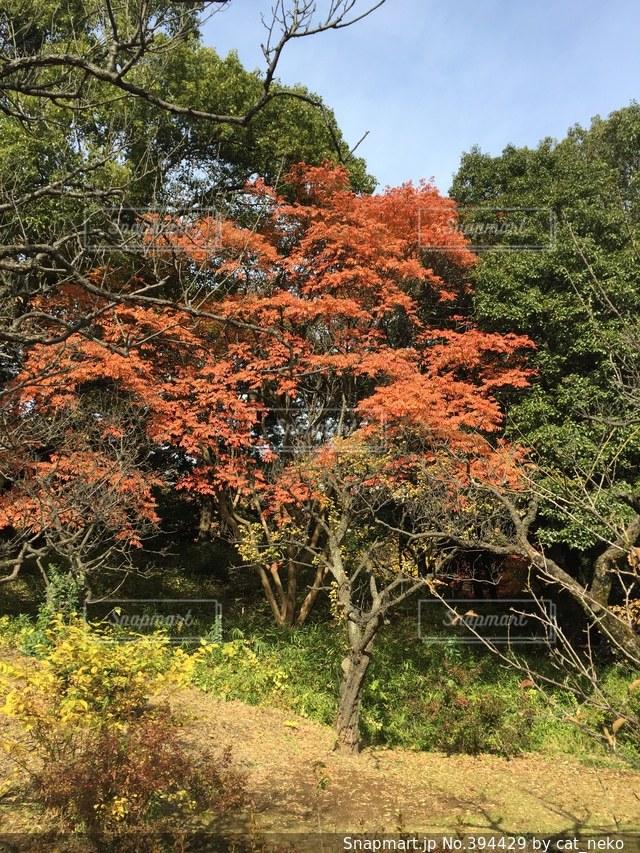 自然,紅葉,散歩,六義園