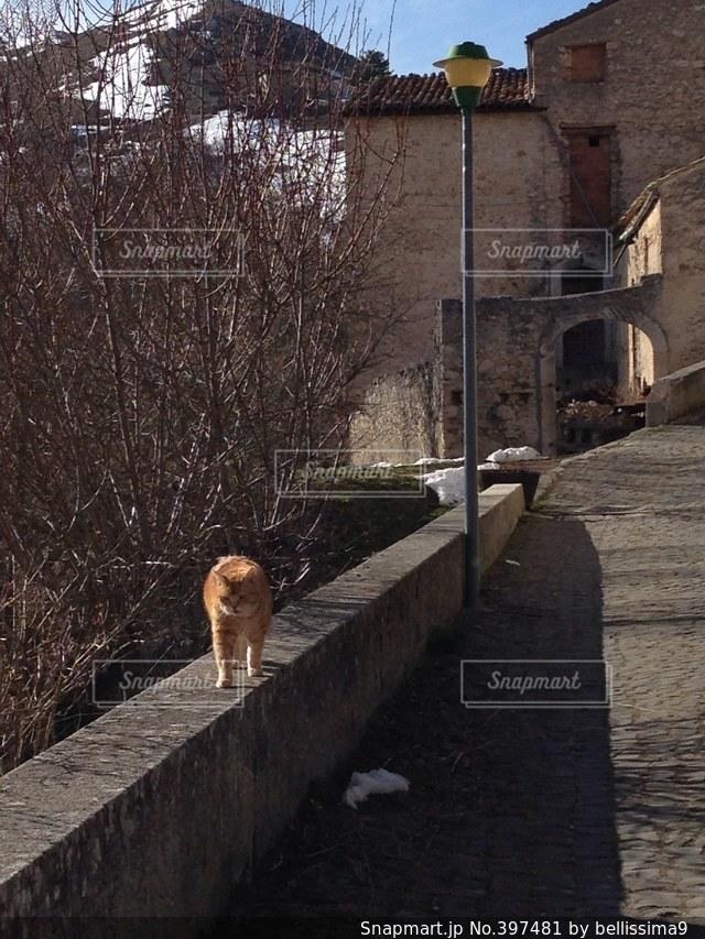 猫,観光,ねこ,イタリア,ぬこ,ネコ