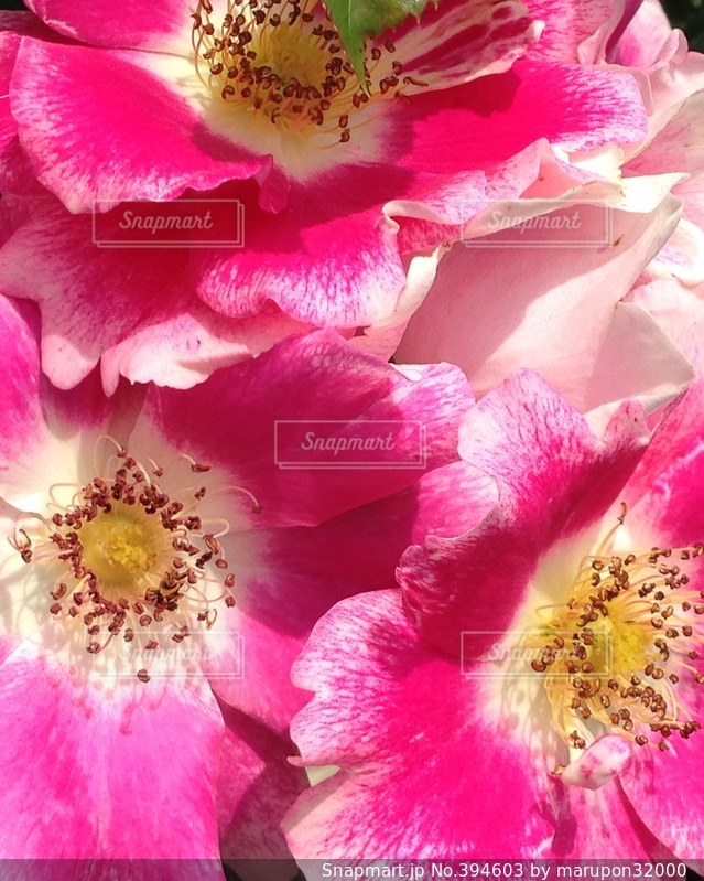 花,ピンク,花束,綺麗,鮮やか,薔薇,可愛い,おしゃれ