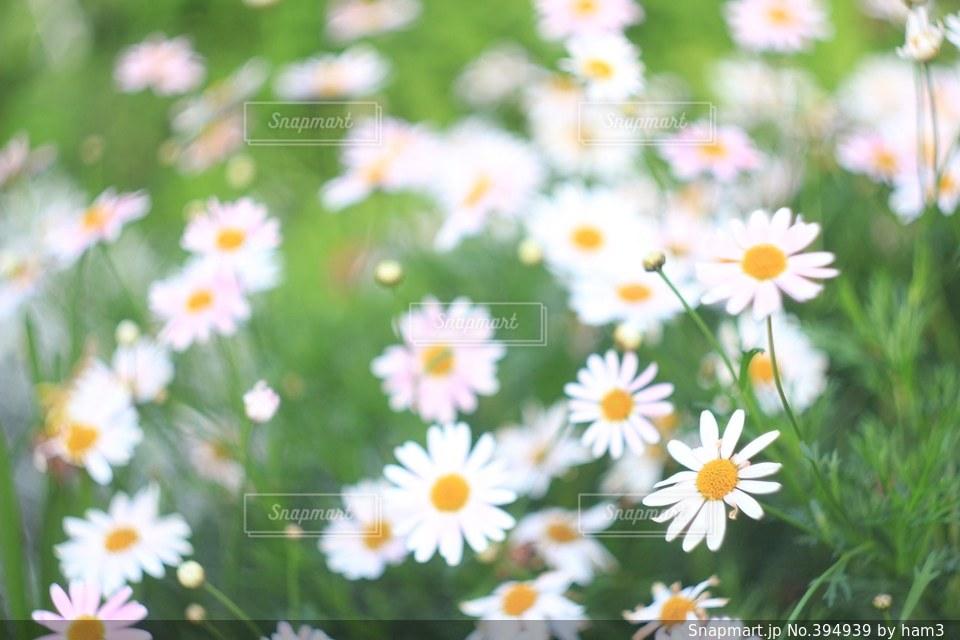 自然の写真・画像素材[394939]