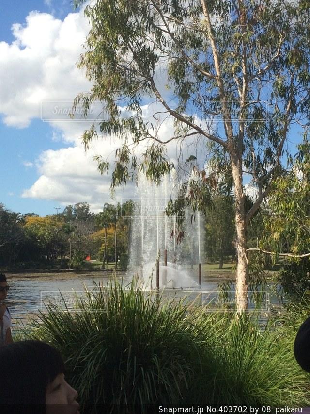 空,絶景,木,綺麗,水,外,噴水,神秘的,快晴