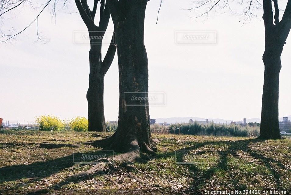 空,公園,春,木,樹木,寂しい