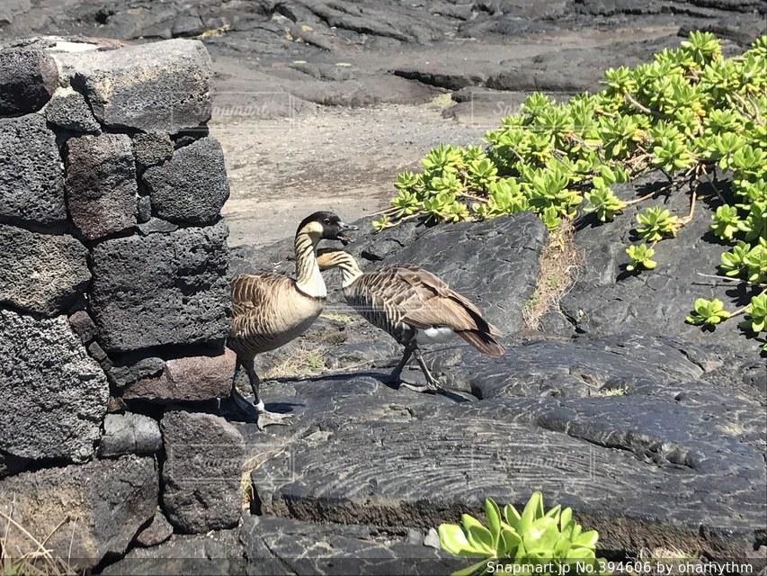海,鳥,南国,青空,海辺,ハワイ,図鑑