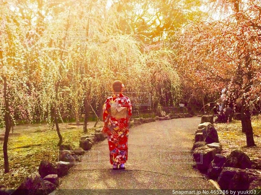 京都の写真・画像素材[465286]
