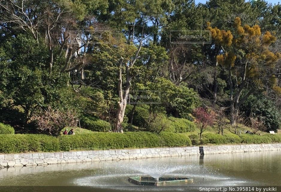 風景,公園,桜,景色