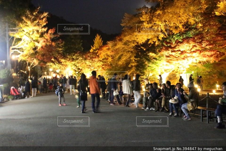 秋,景色,ライトアップ