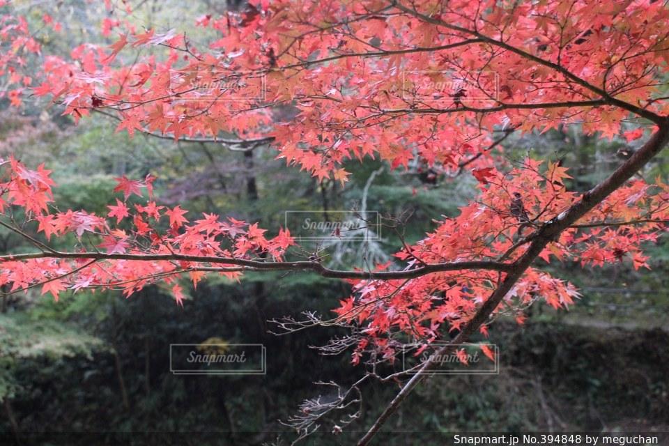 秋,紅葉,景色