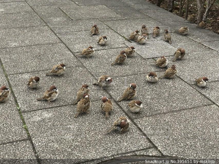 自然,冬,鳥,すずめ,雀,野鳥,寒そう,群,スズメ