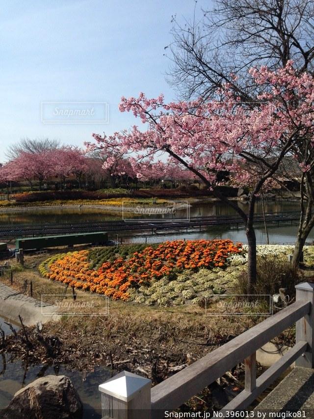 桜,なばなの里,3月