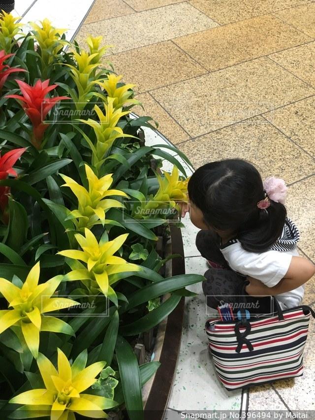 子ども,花,綺麗