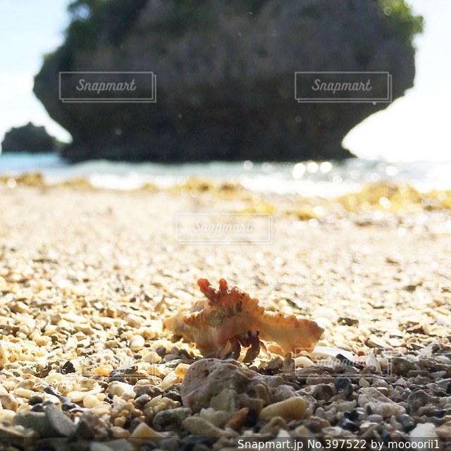 海,かわいい,サンゴ,沖縄,ヤドカリ,キョロキョロ