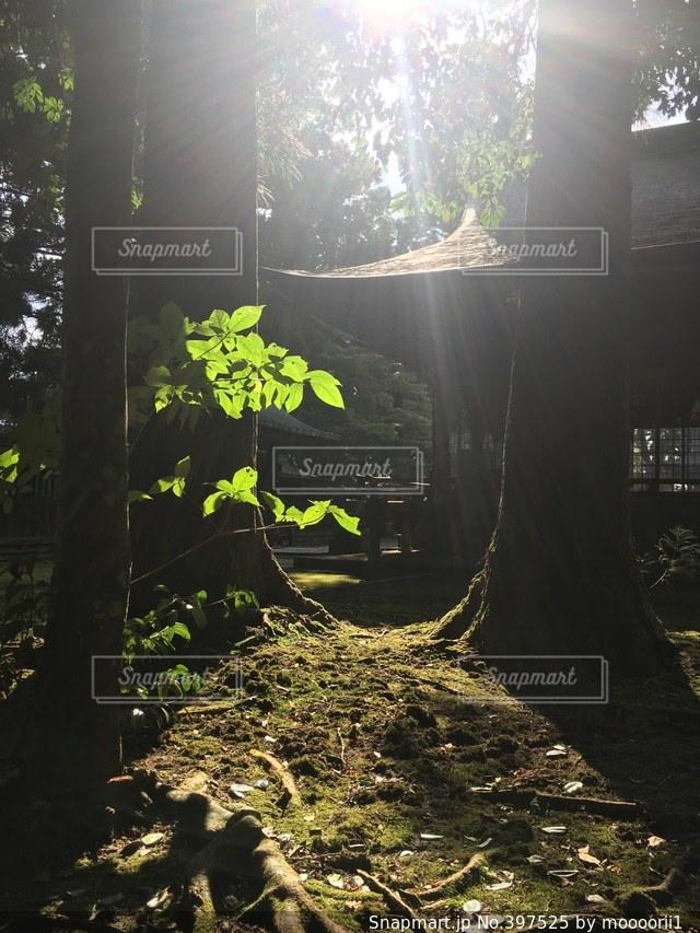 神社,木漏れ日,美しい,苔,山口