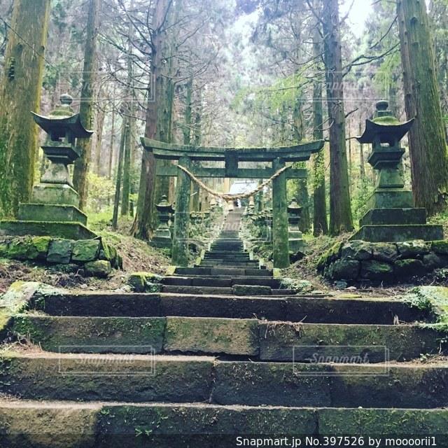 神社,苔,石階段,長い