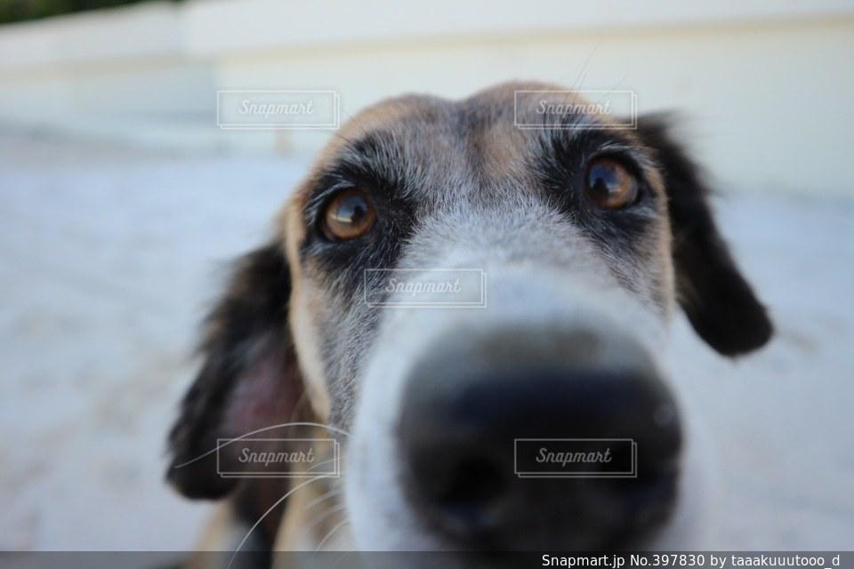 犬の写真・画像素材[397830]