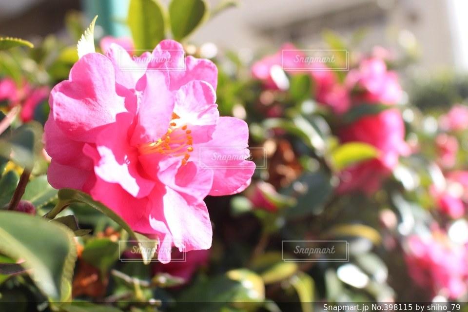 自然,空,春,ピンク,綺麗,青,お花,可愛い,一眼レフ