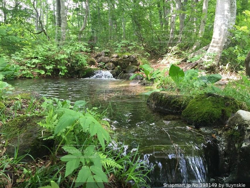 自然,緑,川,水面,山,癒し,日本,せせらぎ
