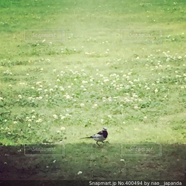 公園,芝生,散歩,暮らし,小鳥