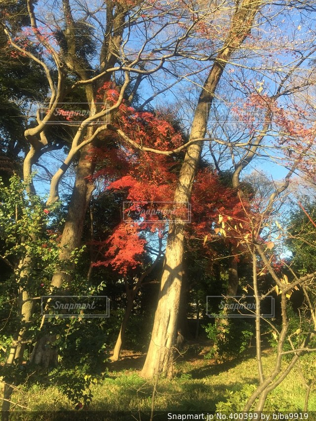 風景,空,公園,秋,紅葉,木,植物,日差し,光,日本庭園