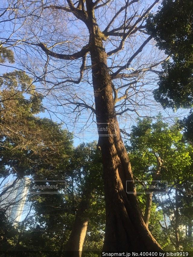 風景,空,公園,秋,木,植物,日本庭園