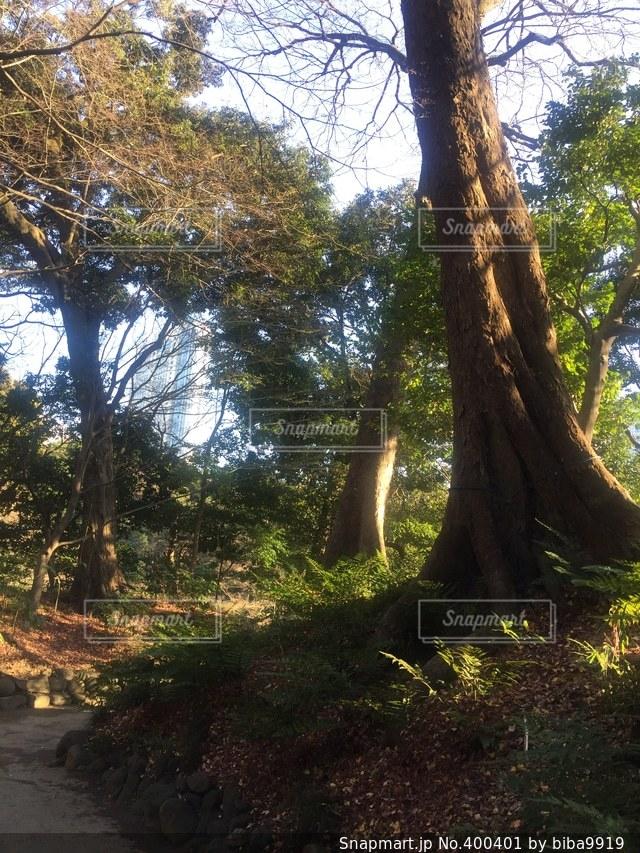 風景,空,公園,秋,木,植物,日差し,光,日本庭園