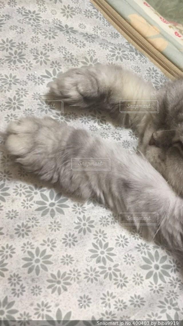 猫,昼寝,寝る,ネコ