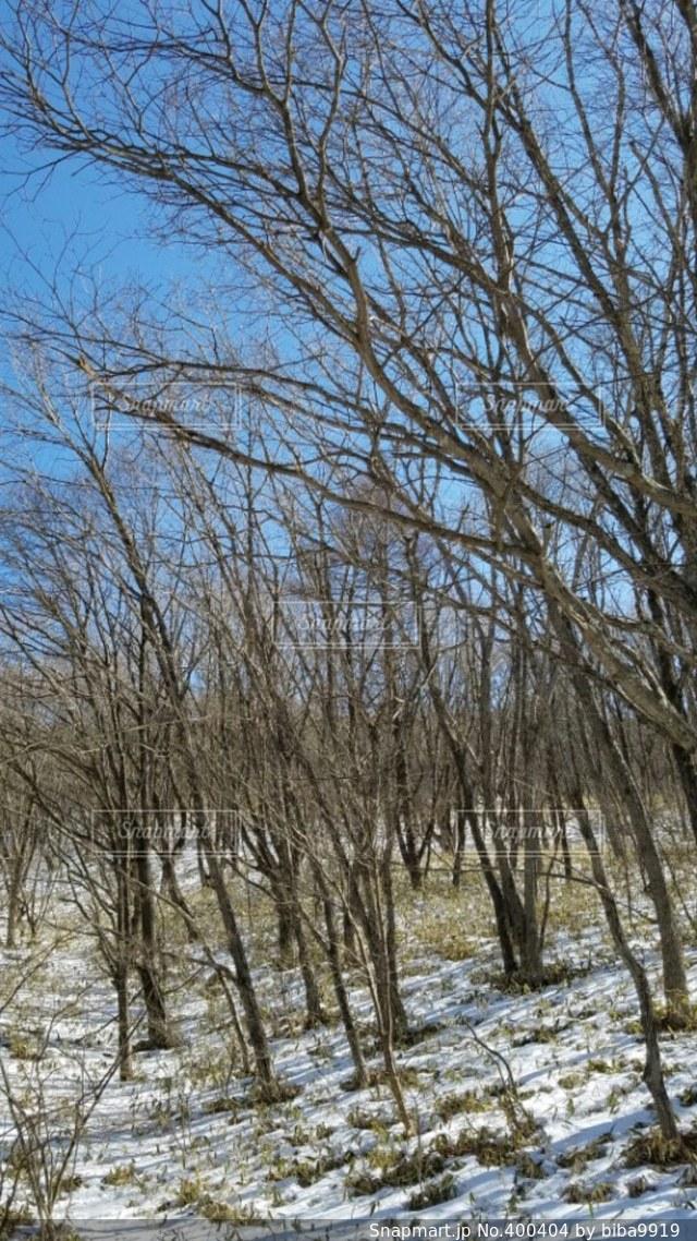 風景,空,冬,木,雪,植物,日差し,旅行,山梨,清里