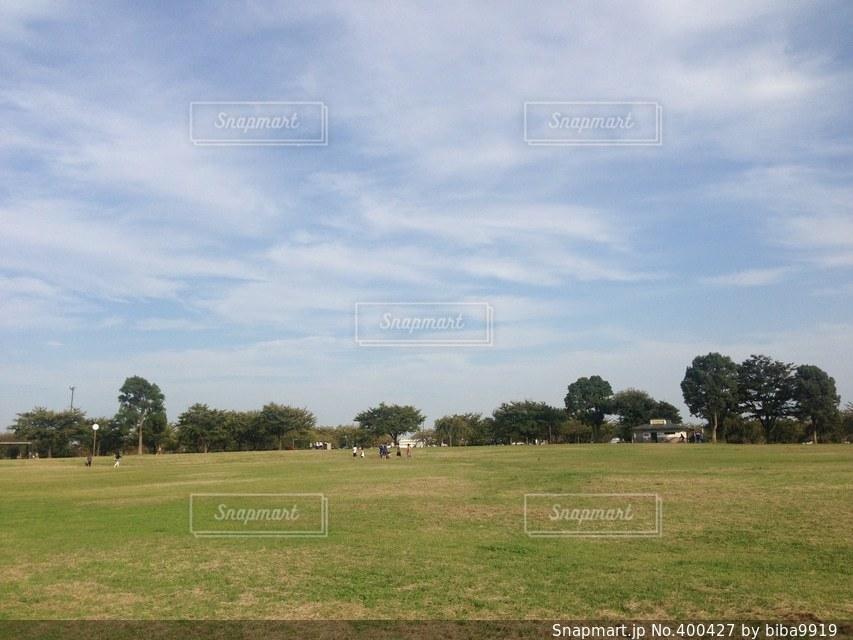 風景,空,公園,木,芝生,緑,植物,青空