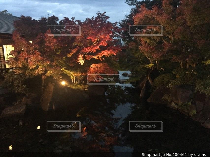 自然,秋,夜,紅葉,赤,キラキラ,日本庭園,風情