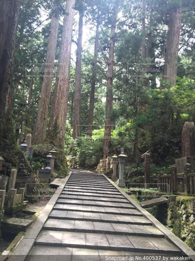 階段,美しい,高野山,聖域