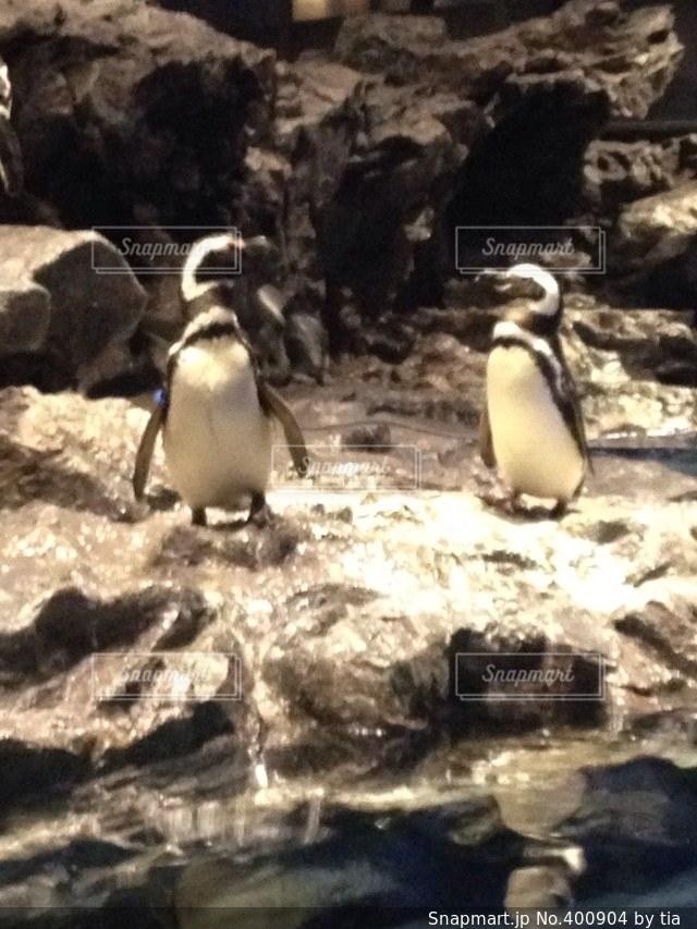 動物,鳥,水族館,ペンギン