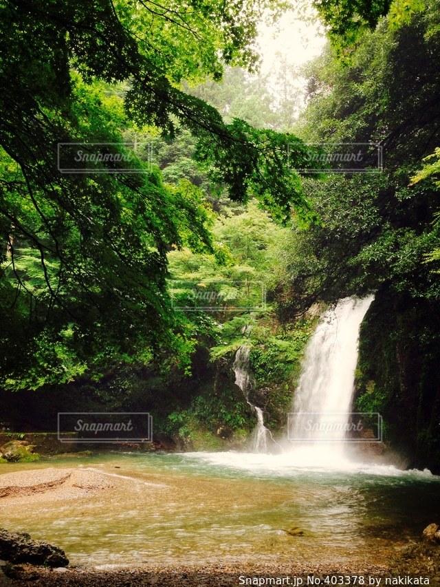 自然,夏,森林,滝,旅行,思い出,岐阜,リフレッシュ,息抜き,休暇,穴場,洗礼