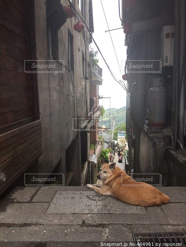 犬,海外,階段,休憩,旅行,路地,台湾,お昼寝,九份
