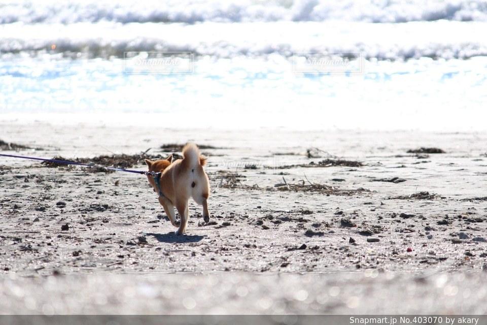 犬の写真・画像素材[403070]