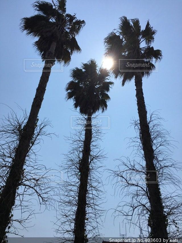 自然,空,太陽,南国,綺麗,晴れ,美しい,神秘的,ヤシの木,太陽の光