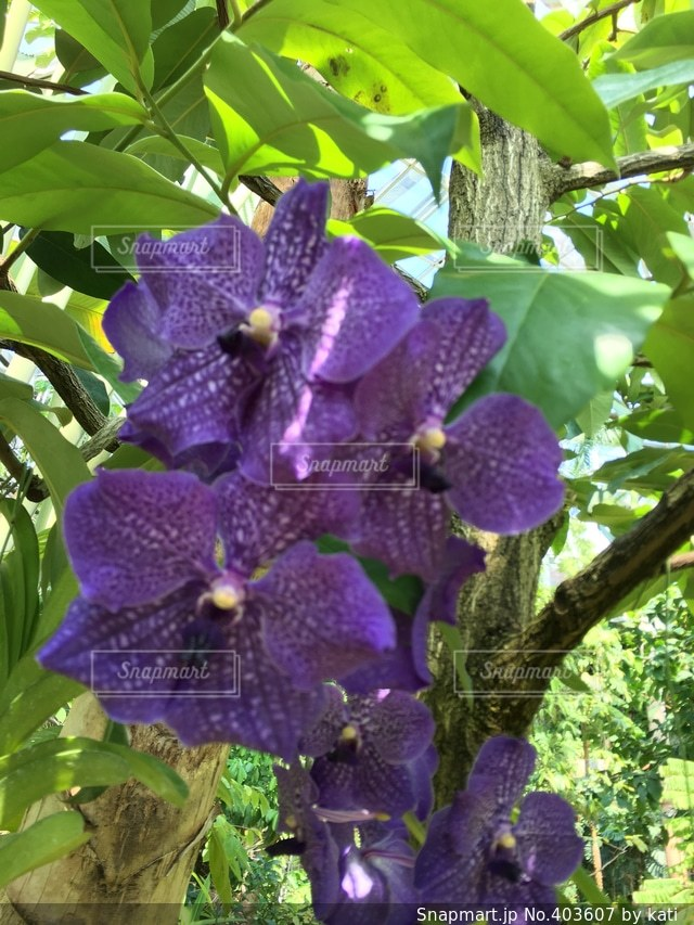 自然,花,かわいい,綺麗,晴れ,美しい,可愛い,はな