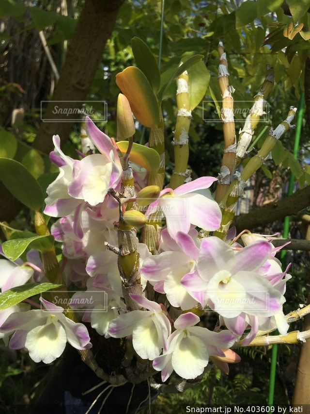 自然,花,春,南国,かわいい,綺麗,晴れ,美しい,神秘的,可愛い,はな