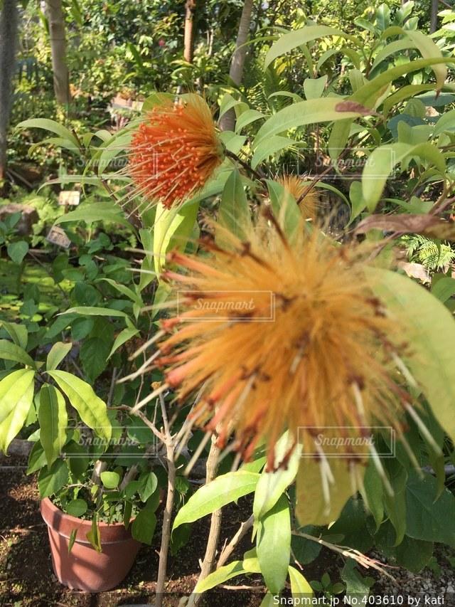 自然,花,春,南国,かわいい,綺麗,晴れ,美しい,可愛い,はな