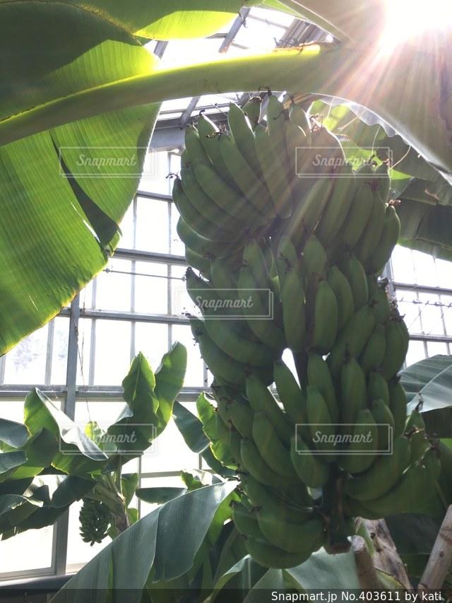 自然,かわいい,晴れ,山,神秘的,可愛い,お気に入り,太陽の光,バナナ