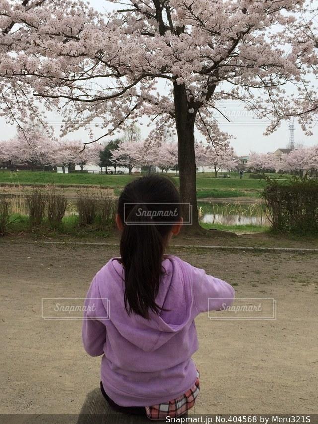 1人,春,桜,後ろ姿,川,子供,女の子,お花見,座る,ポニーテール,河川