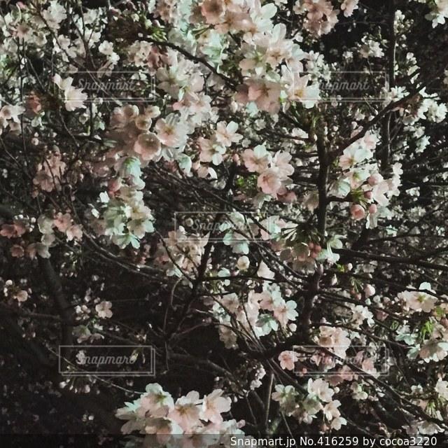 花の写真・画像素材[416259]
