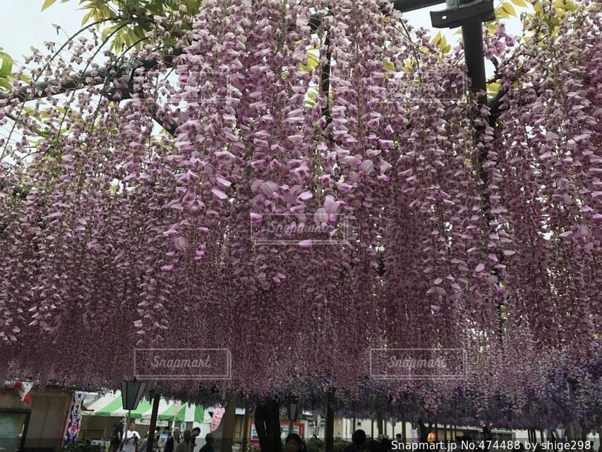 #花 #アップ  #春の写真・画像素材[474488]
