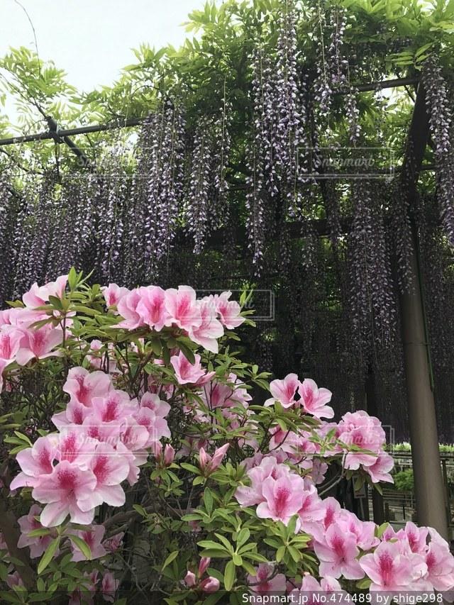 #花 #アップ  #春の写真・画像素材[474489]